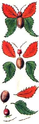 Поделки из желудей - Бабочка