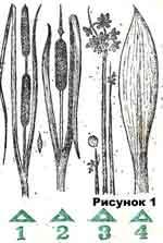 Поделки из сухой травы