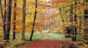 Сценарий Осеннего праздника во 2-младшей группе «Путешествие в осенний лес»