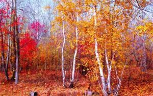 Конспект НОД «Путешествие в осенний лес» в средней группе