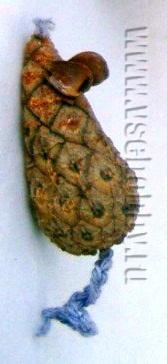 Поделка мышонок из природного материала