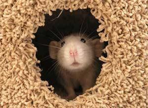 Конспект НОД «Поможем мышке найти норку»
