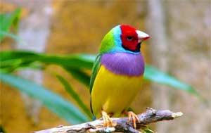 Задачи и содержание работы с дошкольниками по ознакомлению с птицами