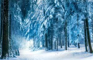Конспект НОД по развитию речи с элементами мелкой моторики «Путешествие в зимний лес»