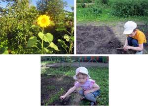 Система работы по экологическому воспитанию и развитию в МБДОУ «Детский сад № 16»