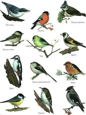 Конспект НОД Зимующие и перелетные птицы