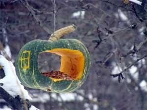 Здравствуй зимушка-зима. Кормушка для птиц.