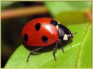 Конспект НОД в средней группе по теме «Удивительный мир насекомых»