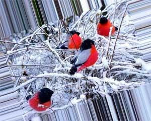 Новогодняя сказка для детей старшего дошкольного возраста «Заколдованные снегири»