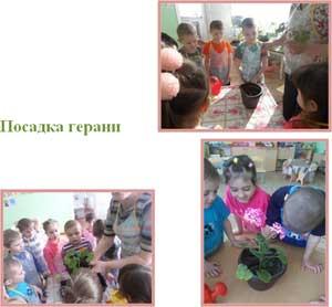 Проект «Мир цветов»