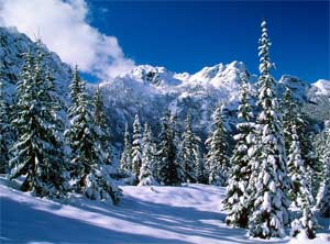 Конспект открытого интегрированного занятия в старшей группе «Путешествие в зимний лес»