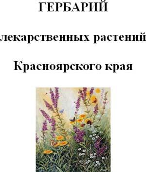 Гербарий лекарственных растений Красноярского края
