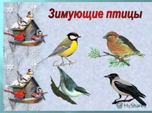 Конспект занятия в первой младшей группе. Тема: «Зимующие птицы».