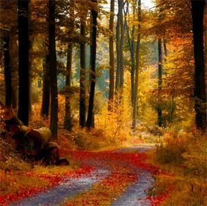 Игра – занятие «Путешествие в осенний лес»