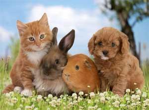 Конспект непосредственной образовательной деятельности «Домашние животные» в средней группе