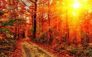 Сценарий осеннего утренника в старшей разновозрастной группе Осенний вальс