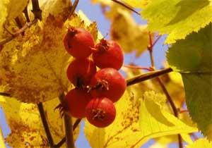 Сценарий осеннего праздника для старшей логопедической группы В поисках Осени