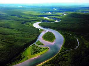 Проект «Лес-достояние Республики Коми»