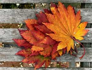 Стихи про Осень для детей от Натальи Широконюк