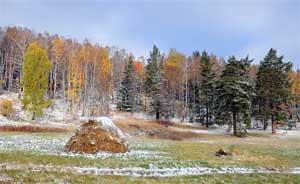 Наблюдение за лесом поздней осенью