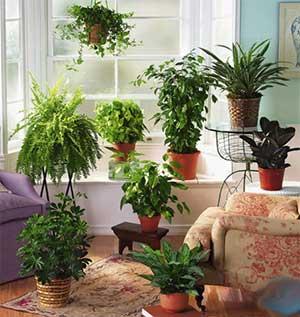 Конспект НОД по художественно-эстетическому развитию во второй младшей группе на тему: «Комнатные растения» (с элементами аппликации)