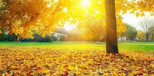 Интегрированное мероприятие в средней группе на тему: Осенние листья