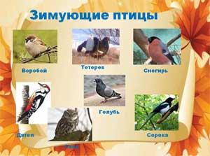 Конспект логопедического занятия по развитию речи «Зимующие птицы»