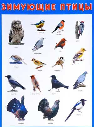 Конспект непрерывной образовательной деятельности по ФЦКМ с элементами экологии «Зимующие птицы» для средней группы