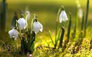 План-конспект проведения экскурсии с детьми подготовительной к школе группы «Весна пришла, Весне дорогу…»