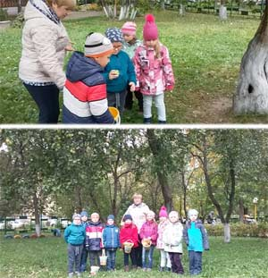 Конспект осенней прогулки «Наблюдение за яблоней»