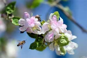 Гостиная: «Бал солнца, весны и цветов» (экологический праздник)