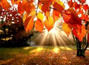 Тема: Осень. Деревья.