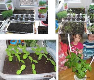 Экологический проект «Огород на окне»