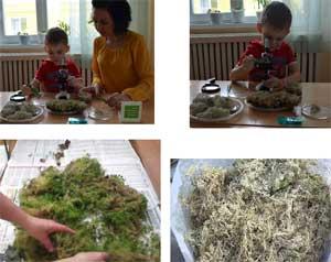 Проект «Природа моего родного края: лишайники и мхи Ямала»