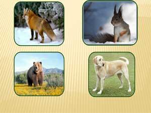 Конспект непосредственно-образовательной деятельности на тему «Дикие животные в лесу» по ознакомлению с миром природы в младшей группе с использованием ИКТ.