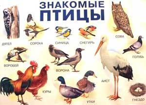 Конспект НОд по ФЦКМ во второй младшей группе «Друзья наши-птицы».