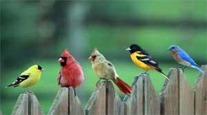 Конспект интегрированного занятия по сенсорному развитию, ознакомлению с окружающим, конструированию для детей младшей группы «Птички»