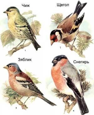 Конспект интегрированного занятия в группе раннего возраста «Птицы на нашей площадке»