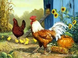 Конспект игровой ситуации по сенсорному воспитанию детей 1 младшей группы «Курочка и цыплятки»