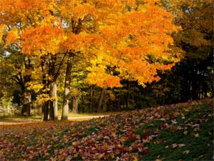 Конспект НОД «Осень в гости к нам пришла» 2 младшая группа (3-4 года)