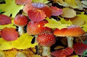 Сценарий осеннего праздника «Разноцветная Осень» для детей старшей группы