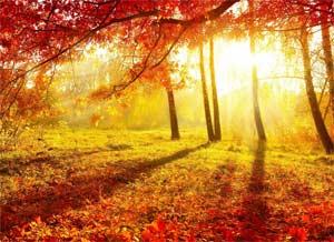 Конспект проведения прогулки в средней группе детского сада Осень