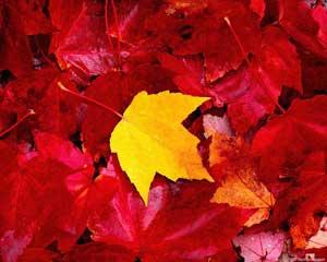 Осенний праздник в школе - Осенняя катавасия